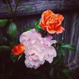 Ashton-Rosen-Flowers