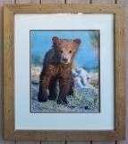 Jim-Sousa-Beary-Cute