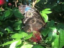 Joe-Fallon-Butterfly-Sanctuary