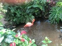 Joe-Fallon-Flamingo-Fantasy