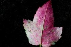 Naomi-Gilman-Leaf