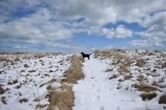 Suzanne-Sutherland-Winter-Walk
