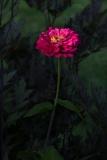 Asticou Gardens, ME