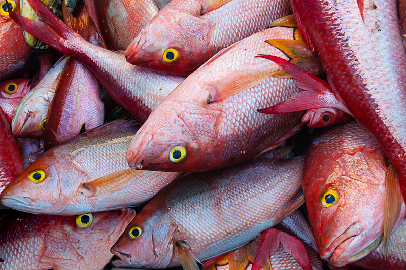 .Red Snapper, Barbados